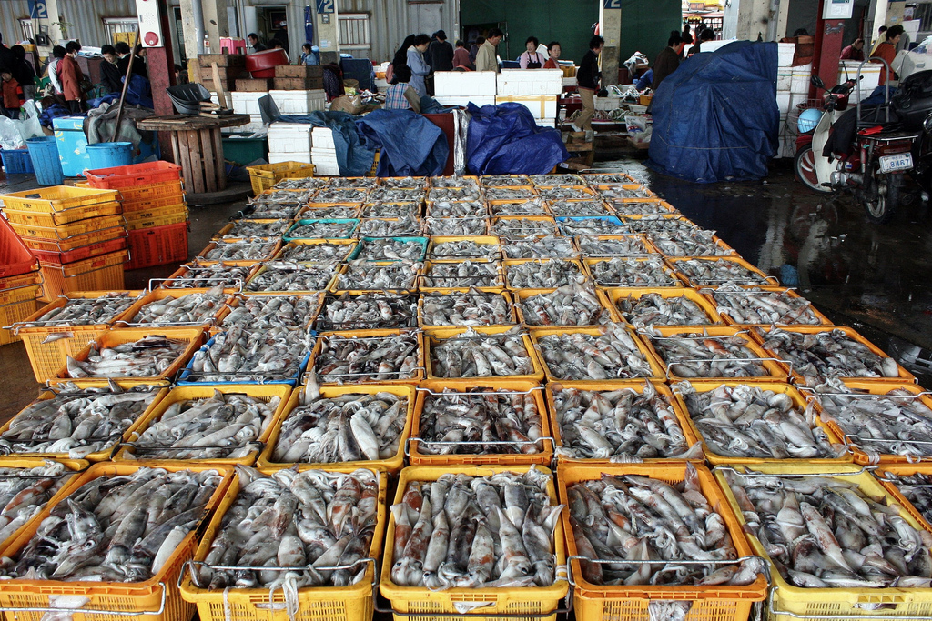 Track the supply chain of your store bought fish for Your fish store